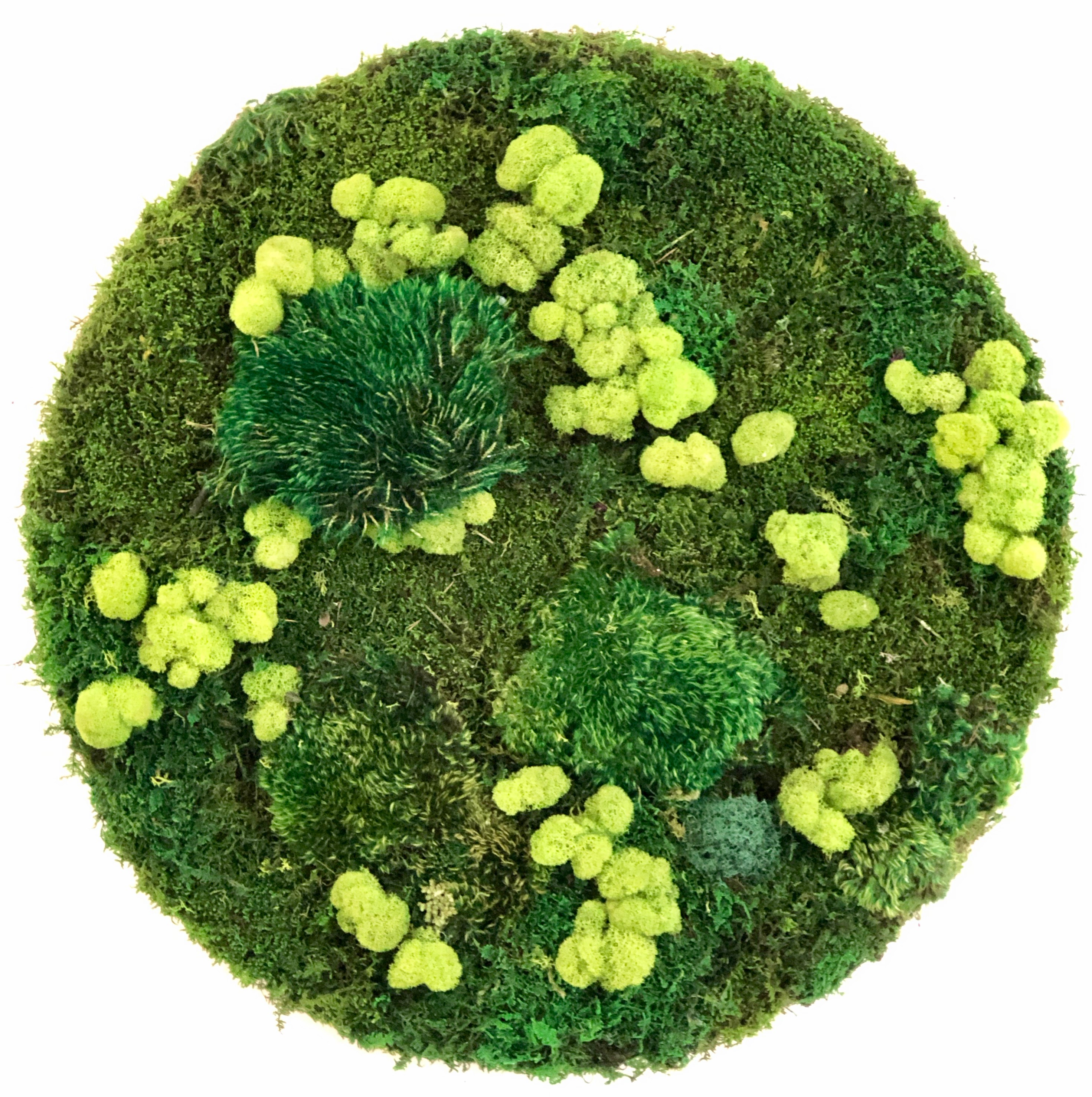 Circle_with_deerfoot_moss.jpeg